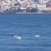Uma semana de golfinhos em Lisboa